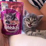 i am the whiskas