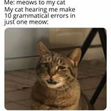 terrible meows