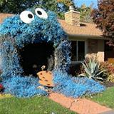 the cookie bush