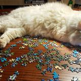 this puzzle is boring