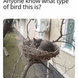 what type of bird is this