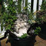 chilling in the pot