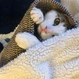 under the blanky