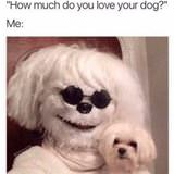 how much do you love your dog