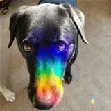 the rainbow snoot