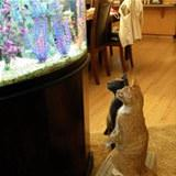 watching the fishes