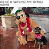 a dog meeting pluto