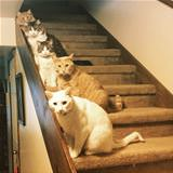 Cats On The Stairs