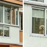 dog has his own window
