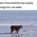 i can relate to this cow