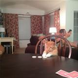 playing some poker