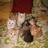 The Kitten Gang