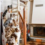 the puppy stairs