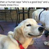 Who Is A Good Boy