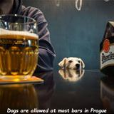 dogs at the bars