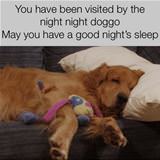 good night doggo