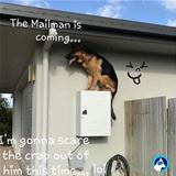 mailman is coming