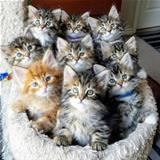 one basket of kittens