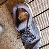Asleep In My Sneaker