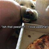 is that peesha