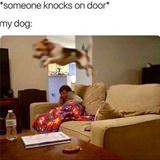 someone knocks on the door