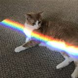 The Rainbow Cat