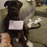 i ate the couch