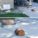 beware of log