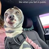 farting in public