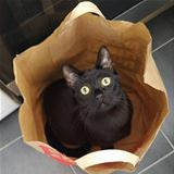 one bag of cat