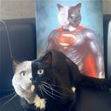 the half super cat