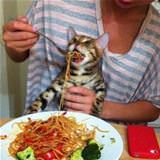 can i has spaghetti