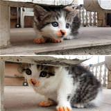 cheeto kitty