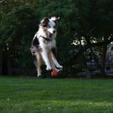 jumping for the ball