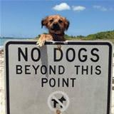 No Dogs Here