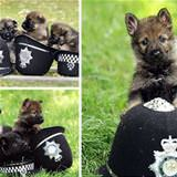 the police pup