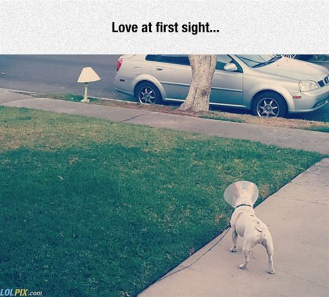 love at first sight