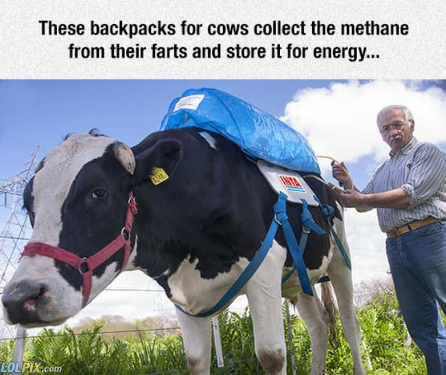 cow backpacks