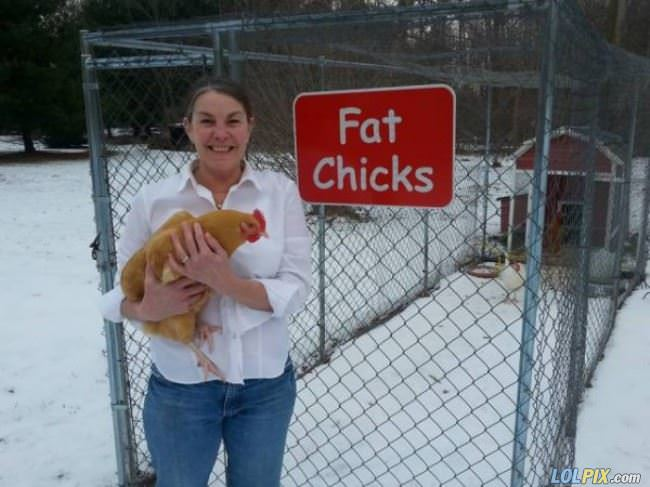 fat chicks