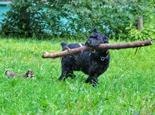 i got my stick