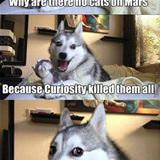 no cats on mars