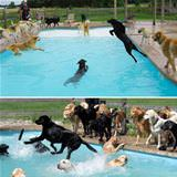 the doggy pool party