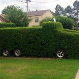 weird bushes