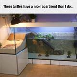 these turtles