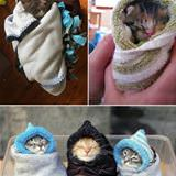pets staying warm