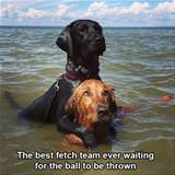the best fetch team