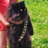 meowbacca