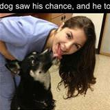this dog saw his chance