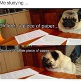 this is me studying