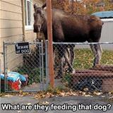 what are they feeding this dog